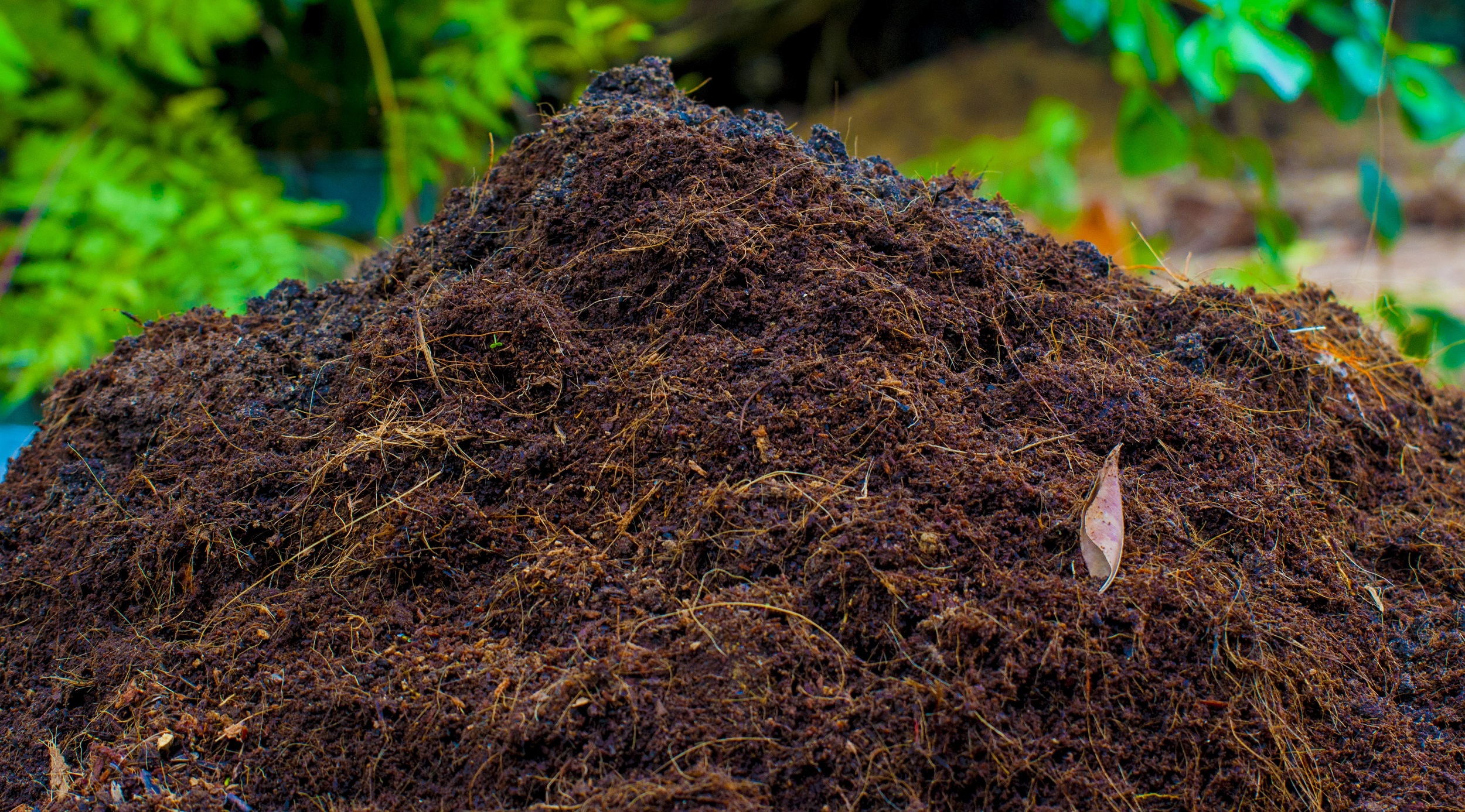Peat as a fertilizer. The use of peat for fertilizer 32